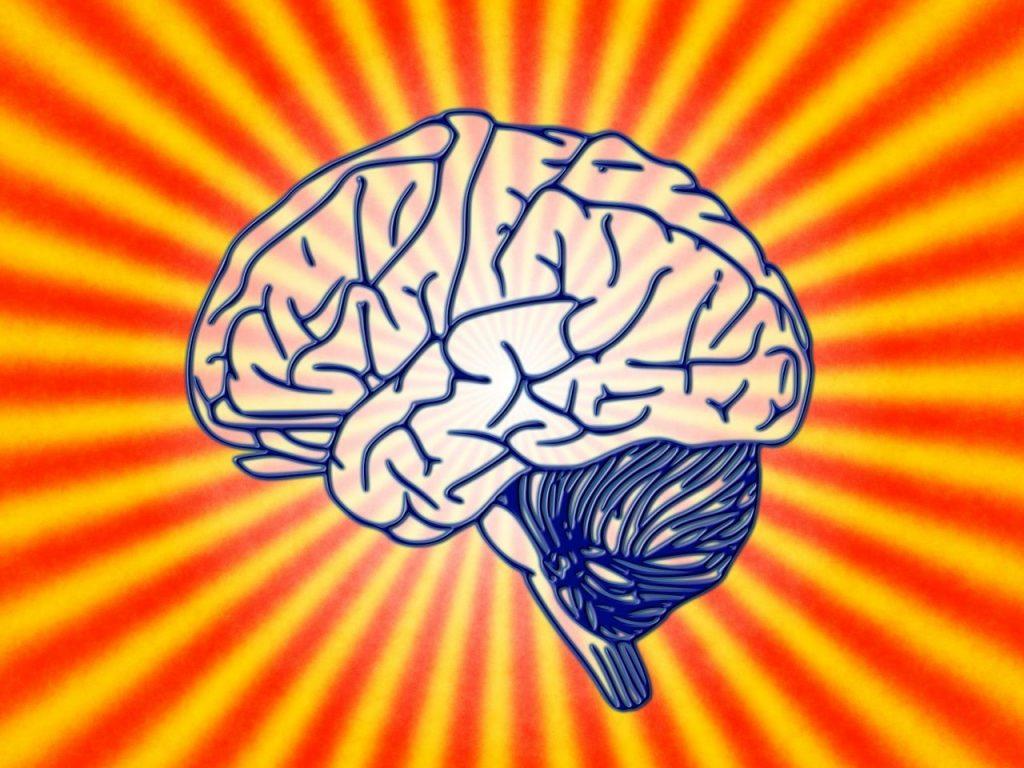 como funciona el cerebro ante el amor. iyodu.org